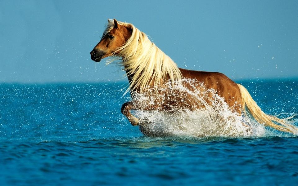 Running Horses Wallpapers Brown Horse Running Wallpapers for Desktop 960x600