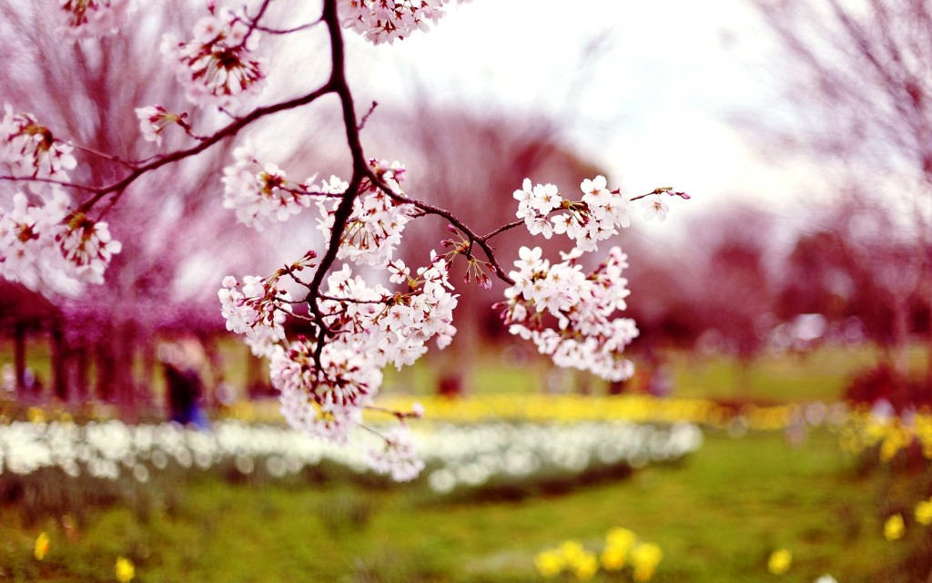 Spring Flowers Wallpapers HD Pictures One HD Wallpaper 1024x640