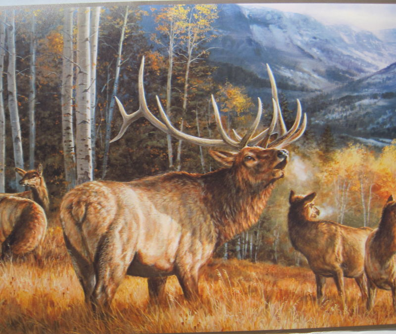 Elk in The Rockies Hunting Wildlife Wallpaper Border 9 800x674