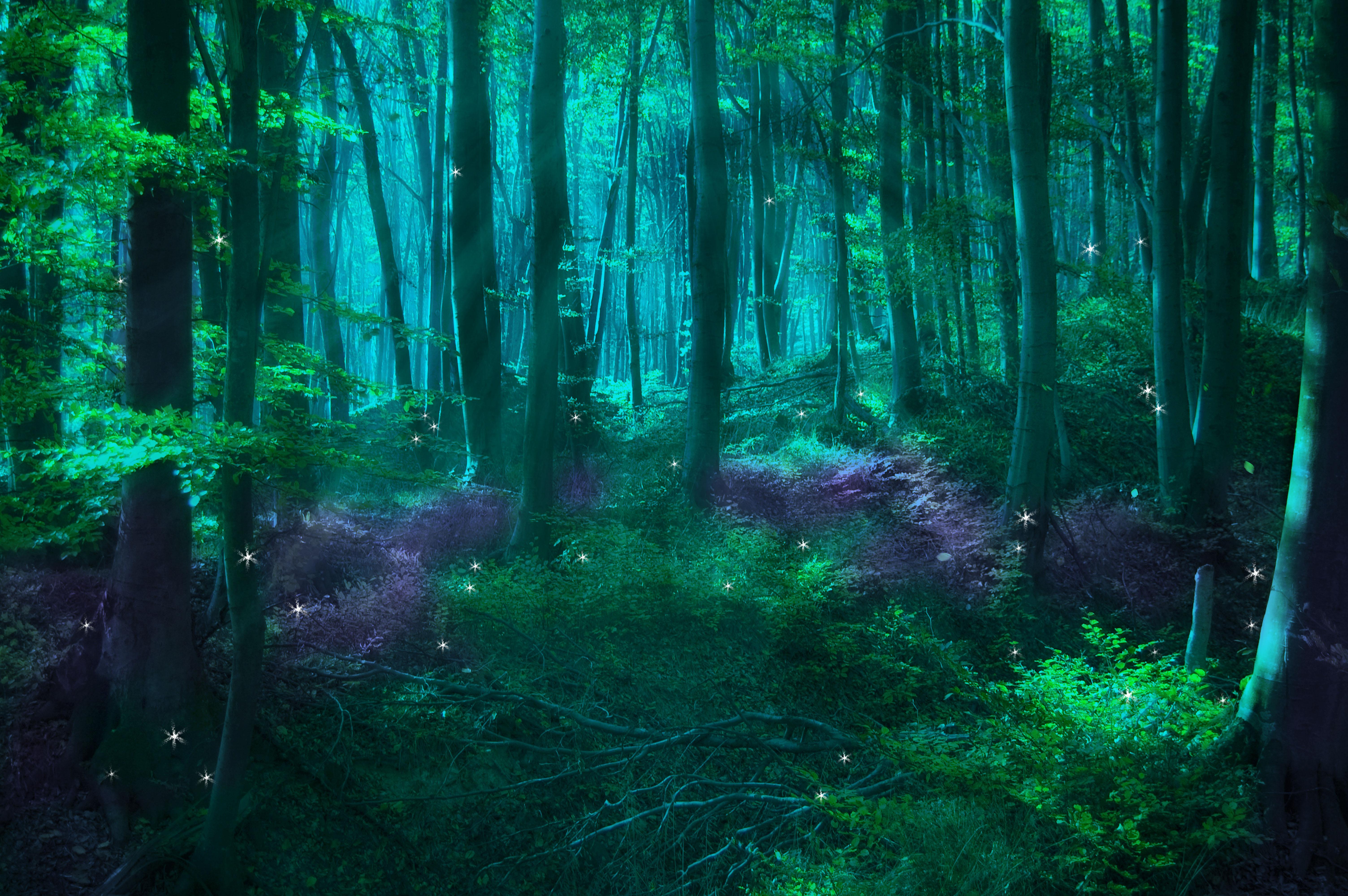 Enchanted Forest Wallpaper Wallpapersafari