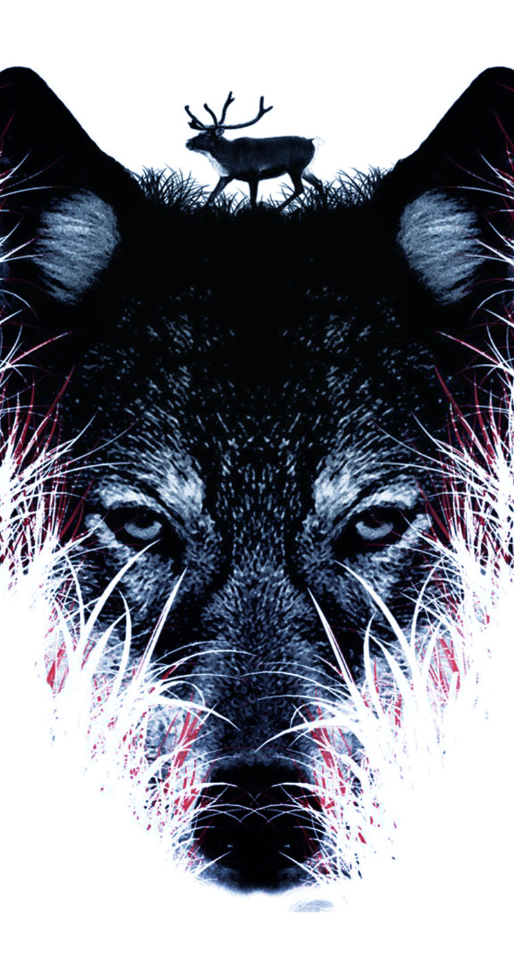 43 Wolf Iphone Wallpaper On Wallpapersafari
