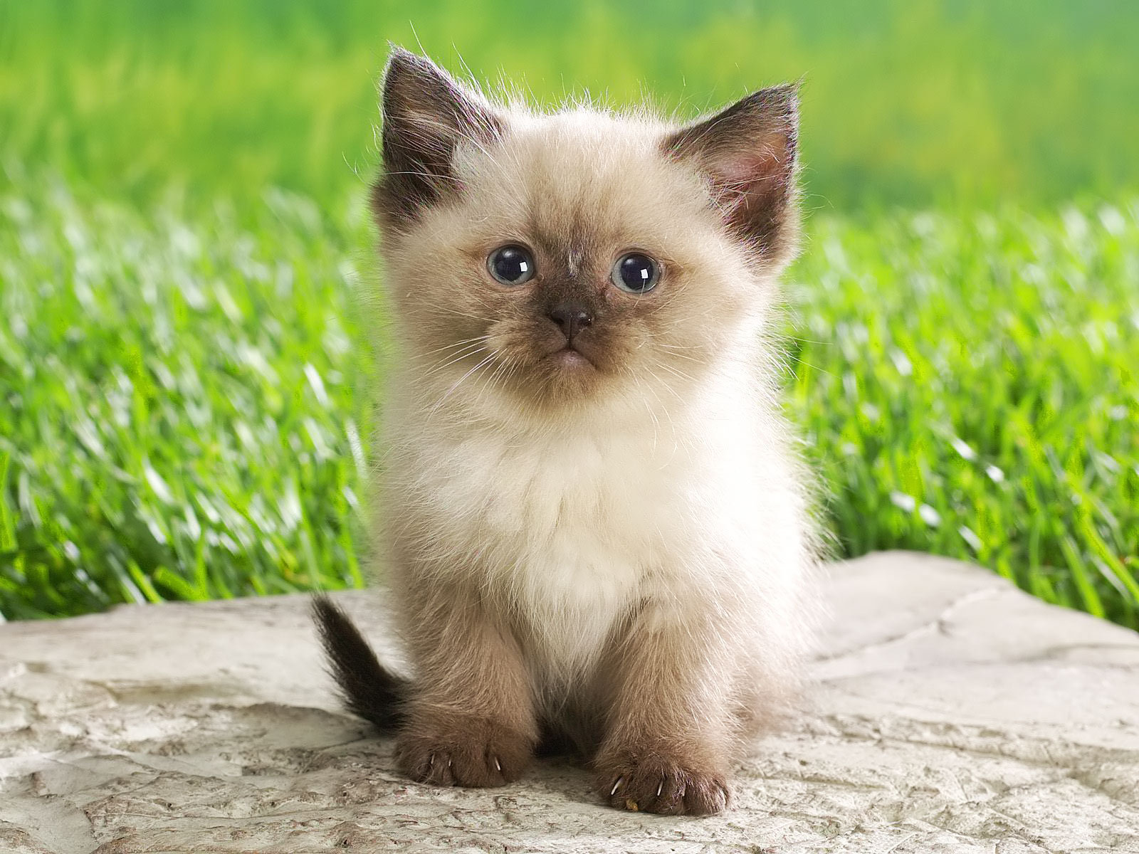 Its HD Animals Funny Wallpapers cute baby kittens 1600x1200