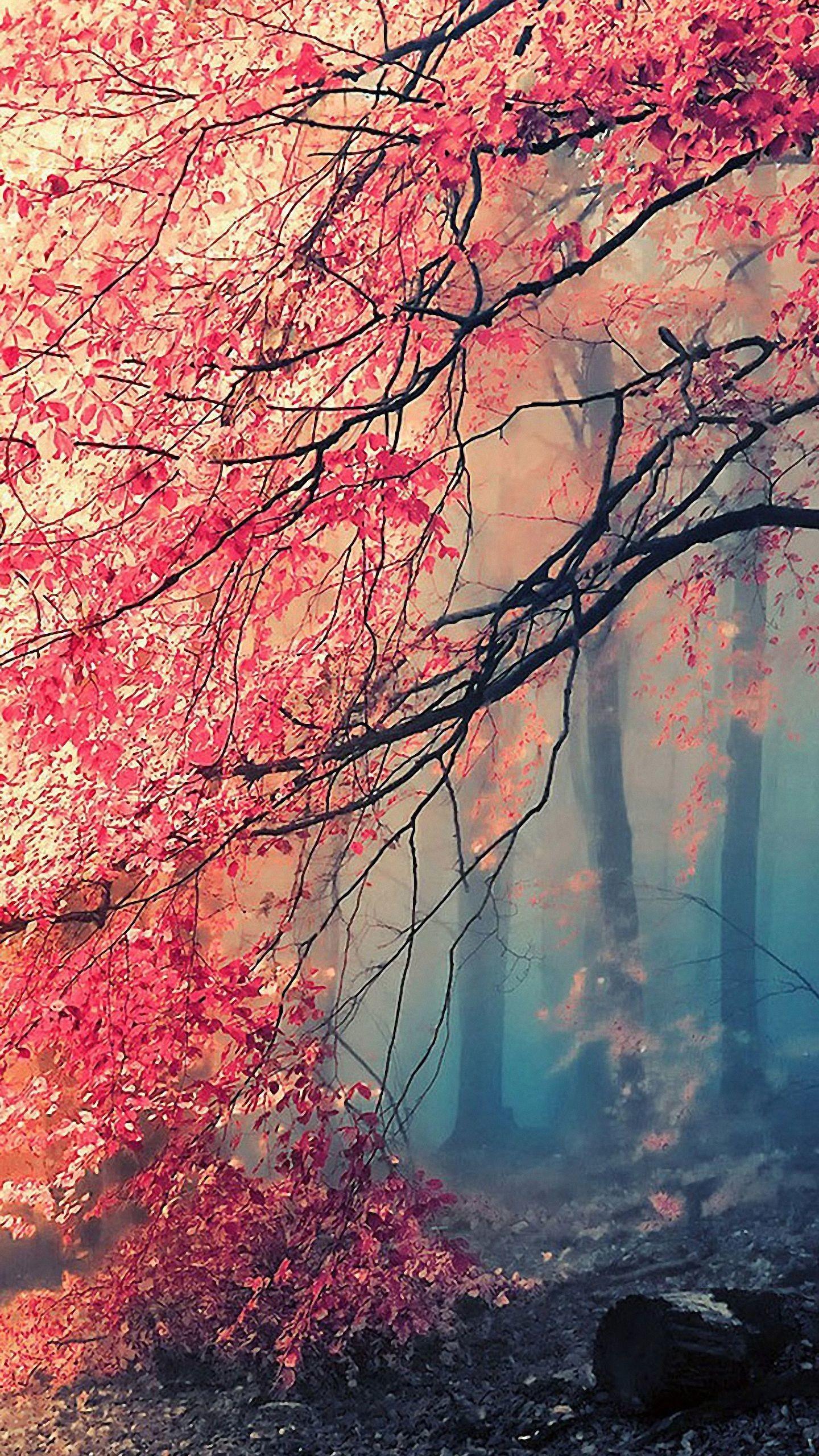 Beautiful Wallpaper For Iphone 6 102204   HD Wallpaper 1440x2560