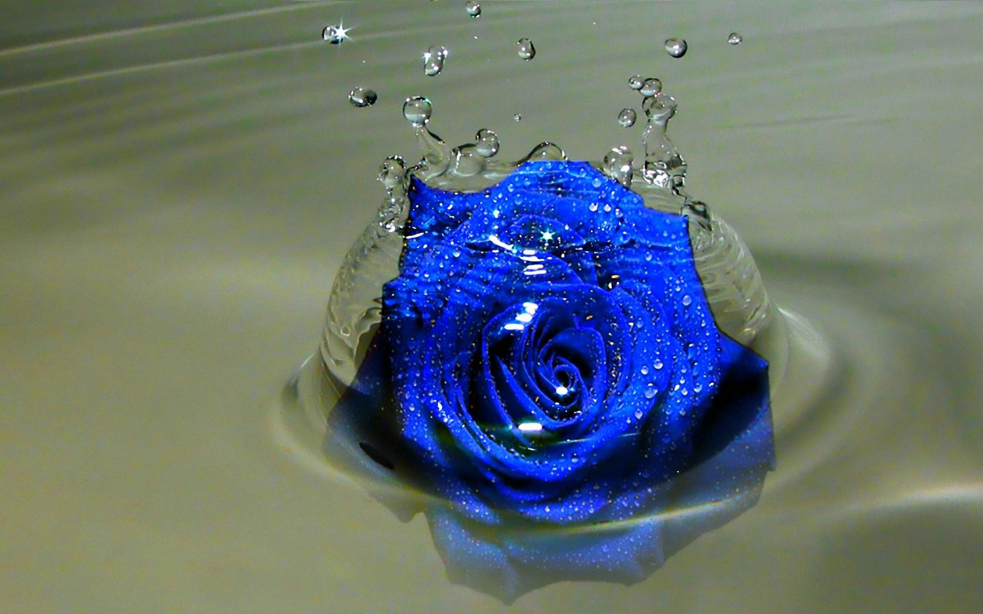 Free Blue Rose Wallpaper Wallpapersafari
