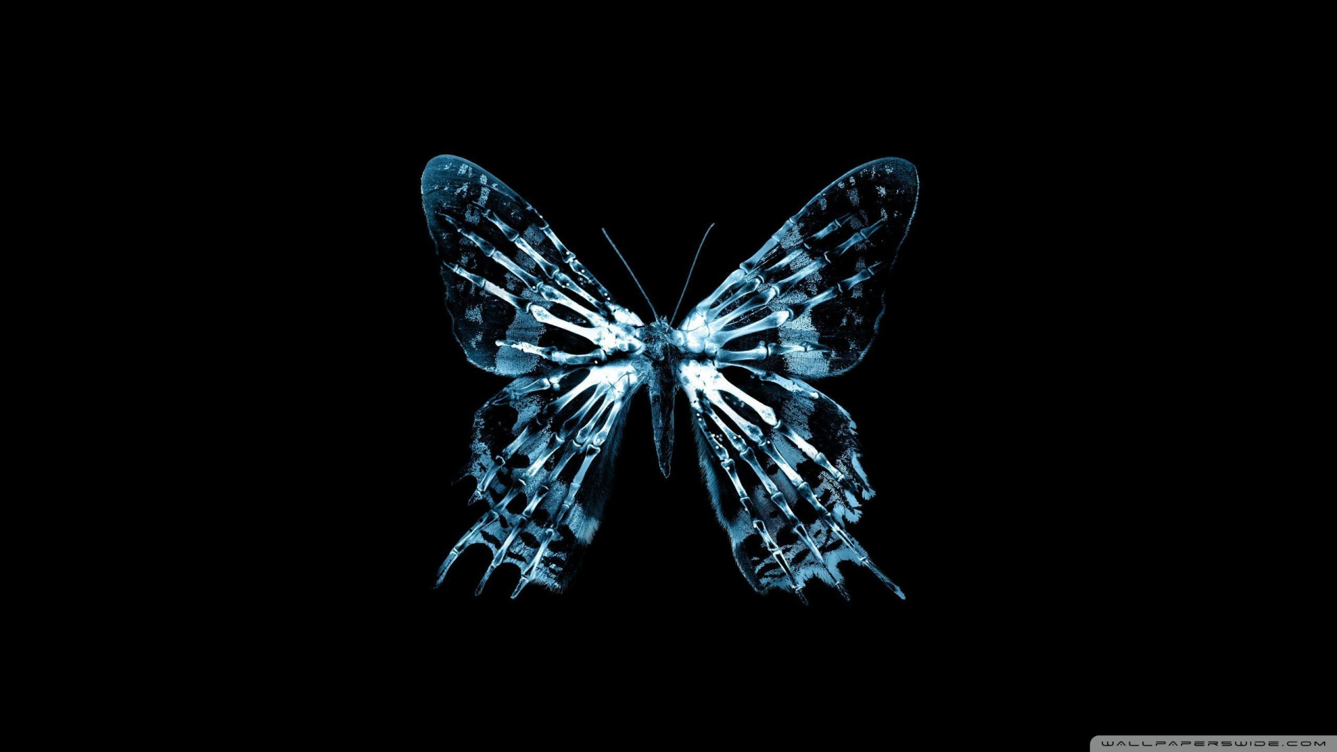 Butterfly X Ray Wallpaper 1920x1080 Butterfly X Ray 1920x1080