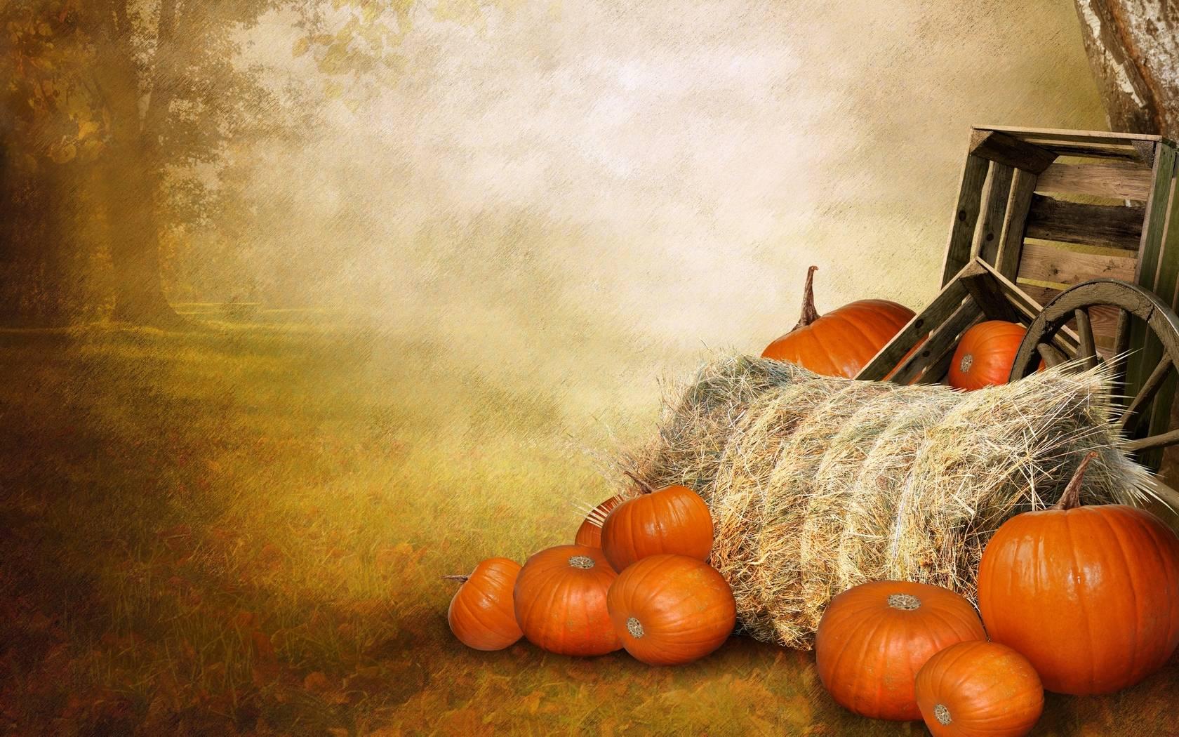 Pumpkin Wallpapers 1680x1050