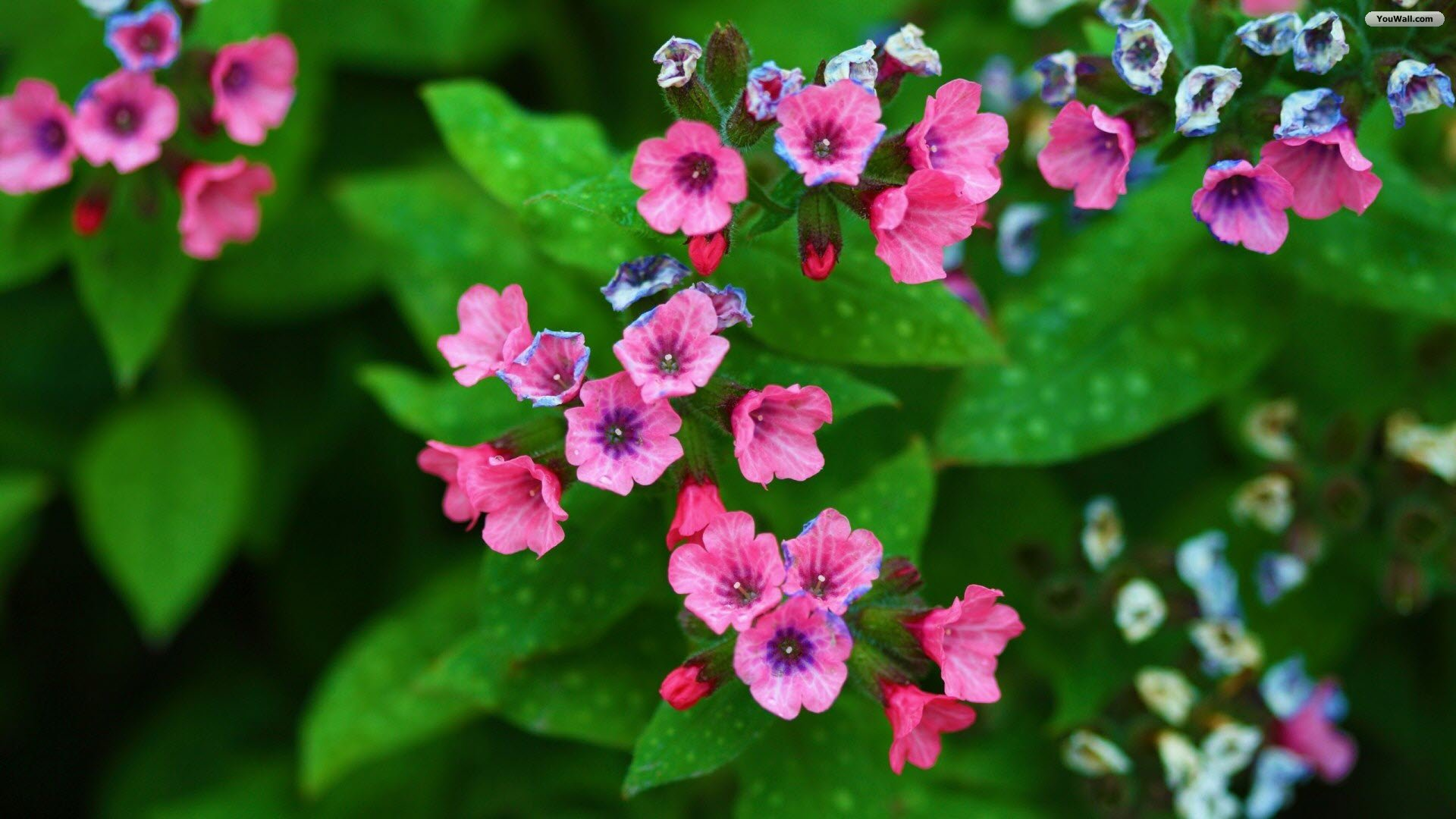 Tiny Pink Flowers Wallpaper   wallpaperwallpapersfree wallpaper 1920x1080
