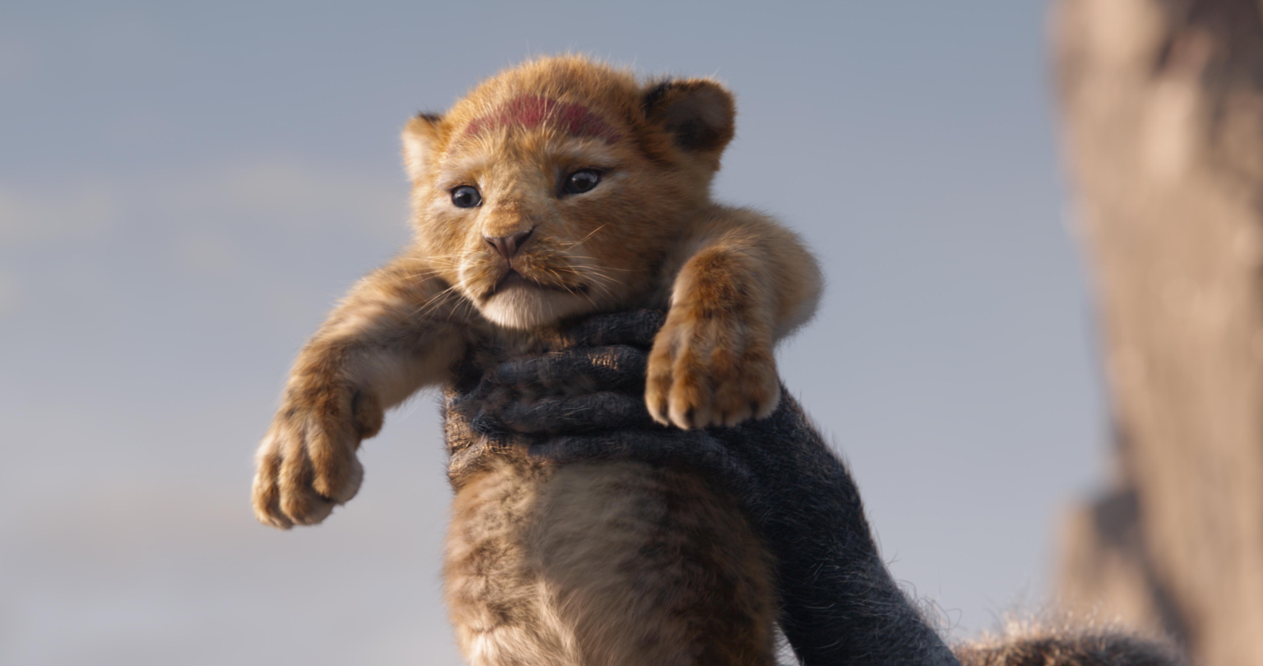The Lion King 2019   Photo Gallery   IMDb 4096x2160