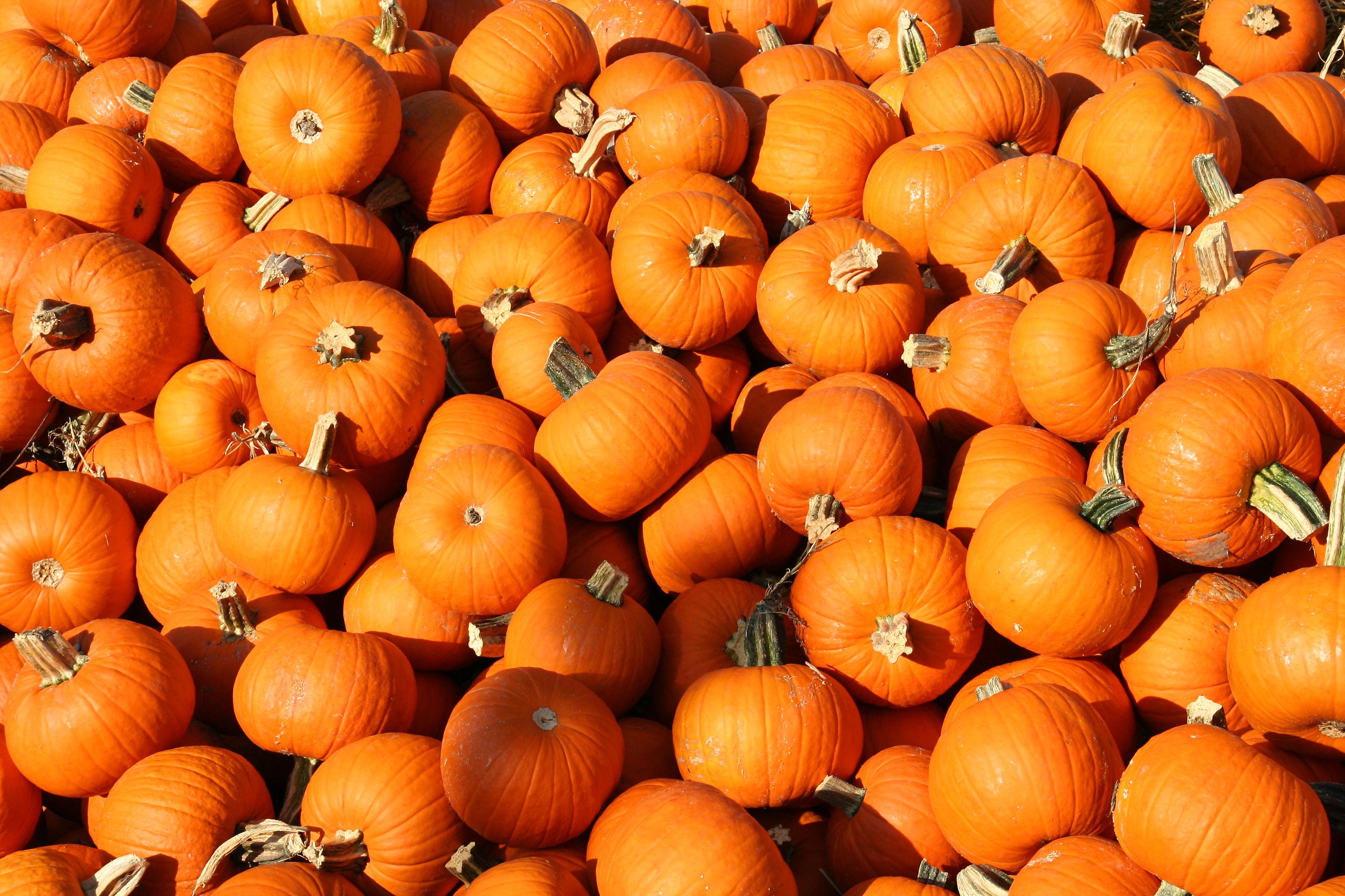 Pumpkin Wallpapers HD 3456x2304