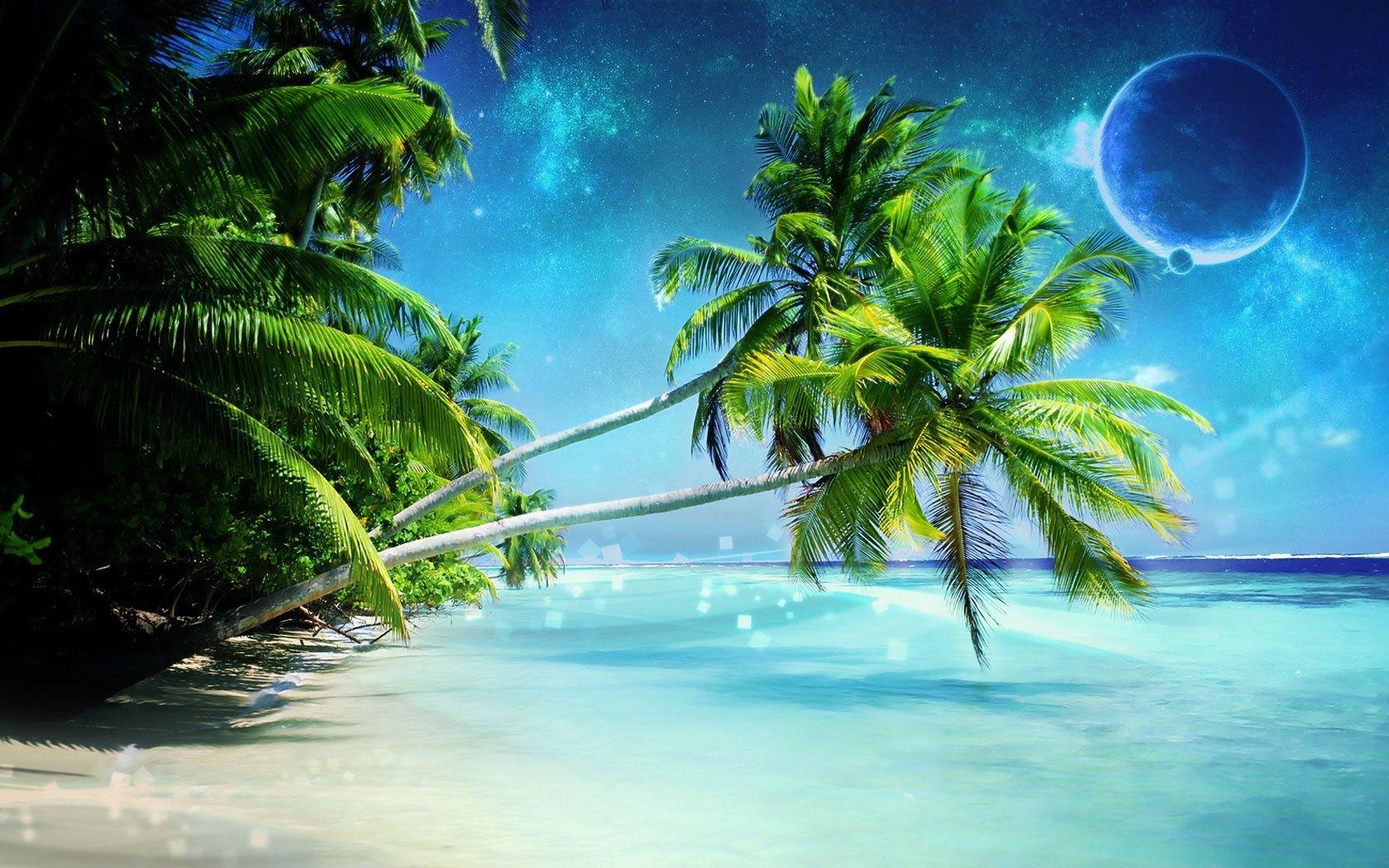 Palm Tree Beach Wallpapers 1680x1050