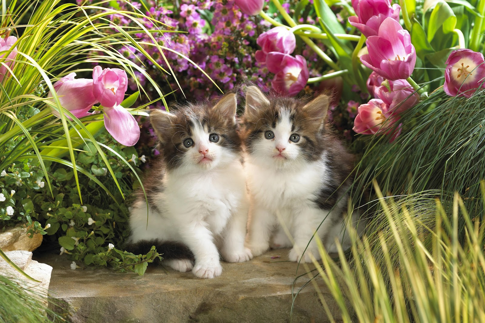All Wallpapers Beautiful Cats Hd Wallpapers 1600x1066