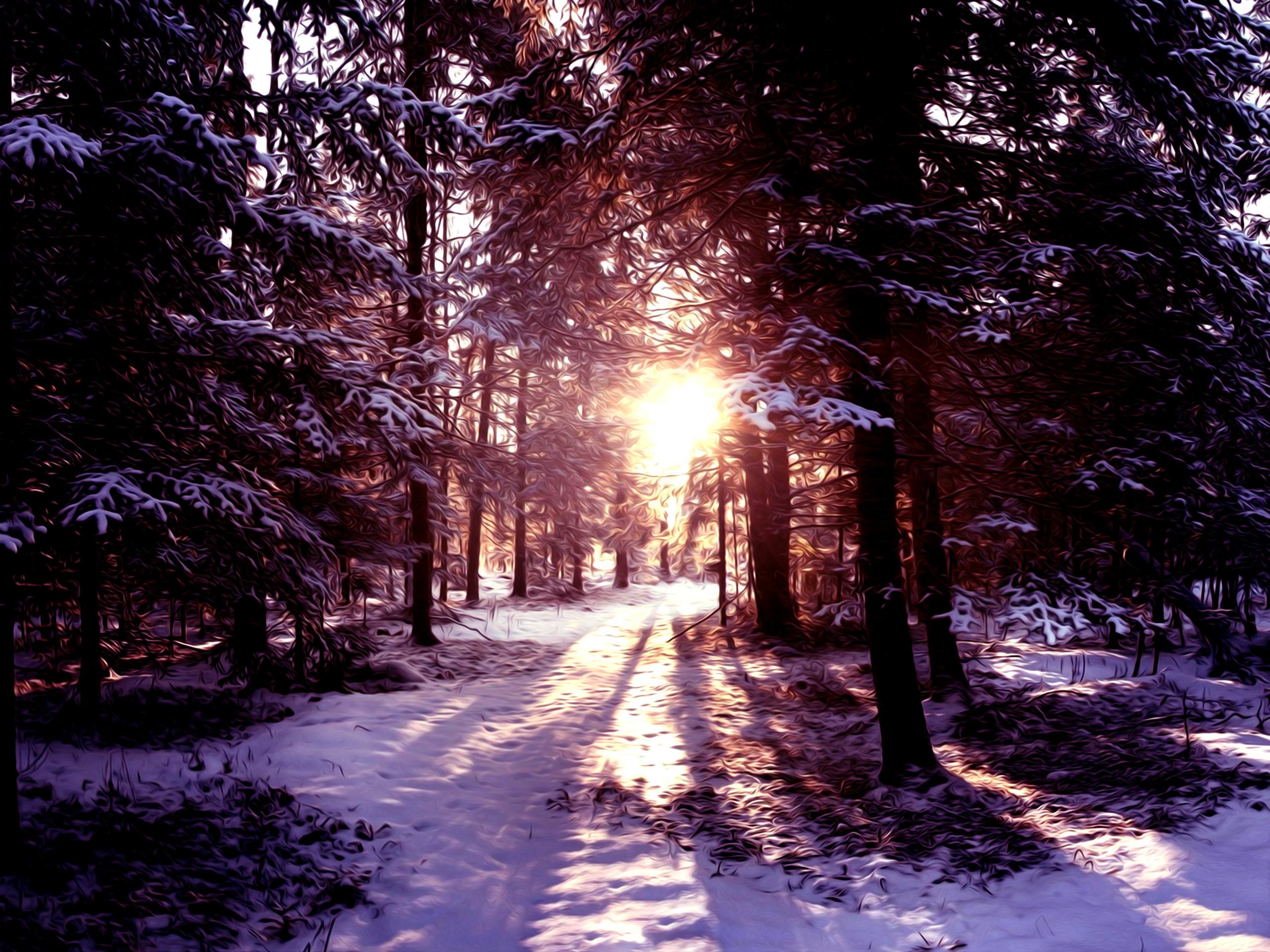 winter snow scene wallpapers   wwwhigh definition wallpapercom 2560x1920