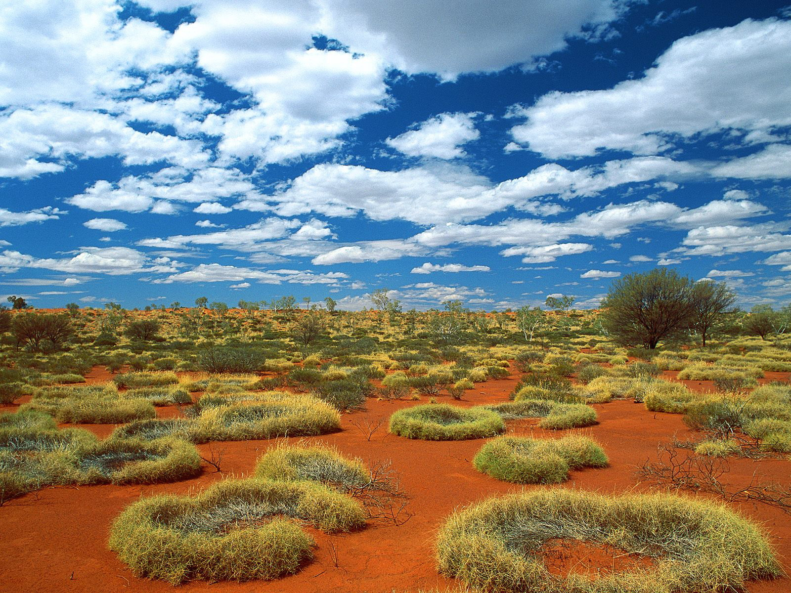 Free Download Australian Nature Wallpapers And Images