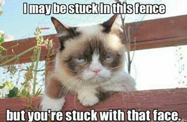 grumpy cat meme IMGUST 630x411