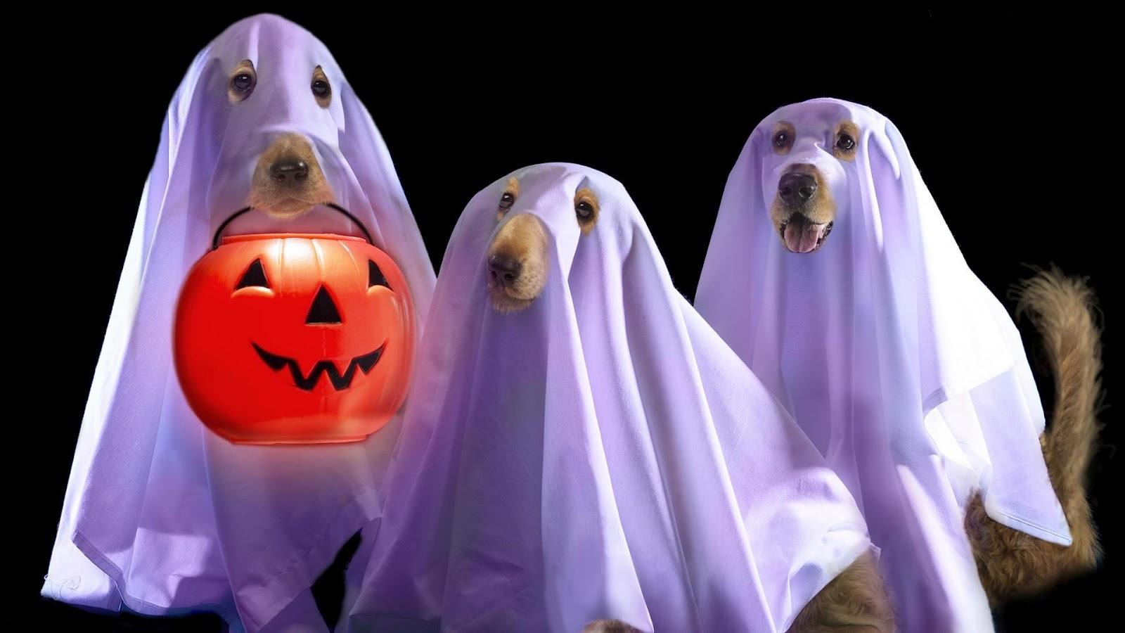 Хэллоуин картинки приколы