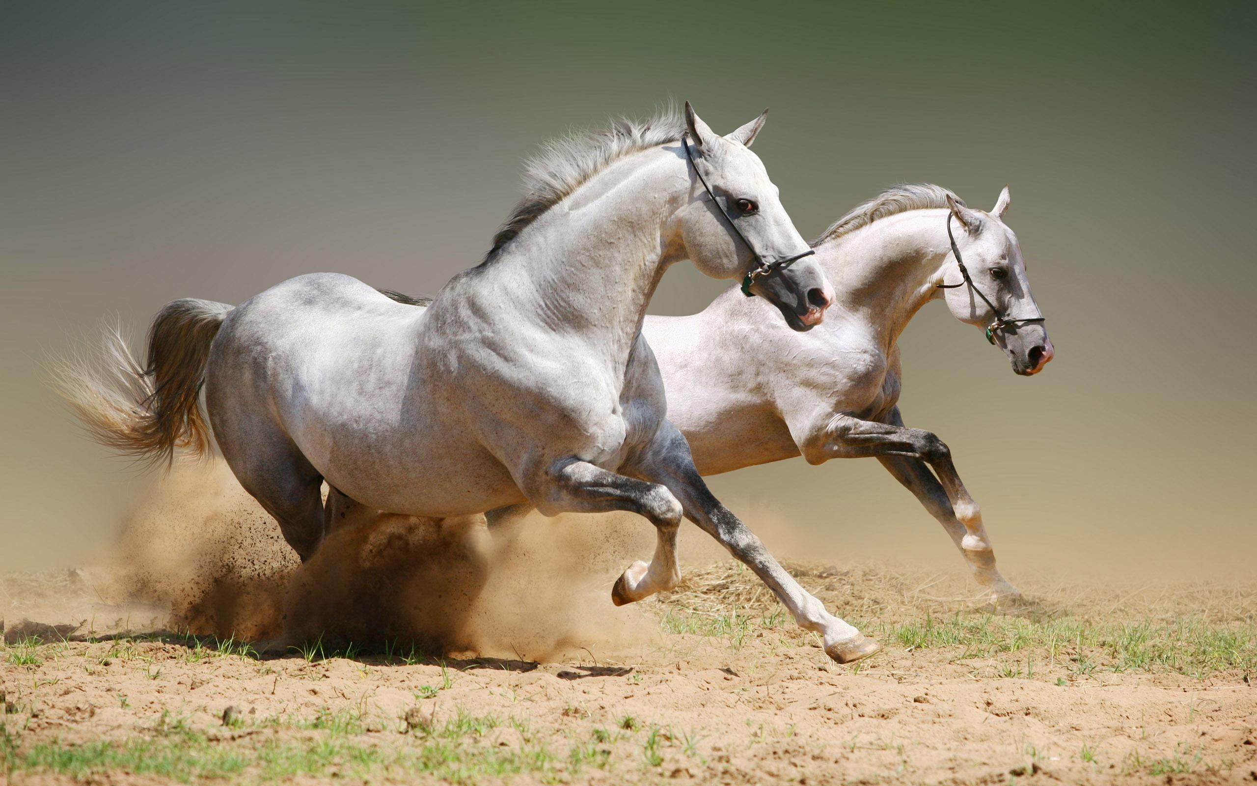 Horse desktop wallpaper is a great wallpaper for your computer desktop 2560x1600
