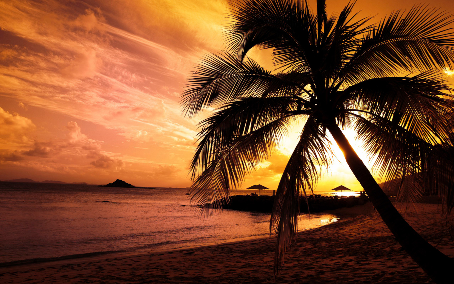 Theme Bin Blog Archive Beach Palm HD Wallpaper 1920x1200