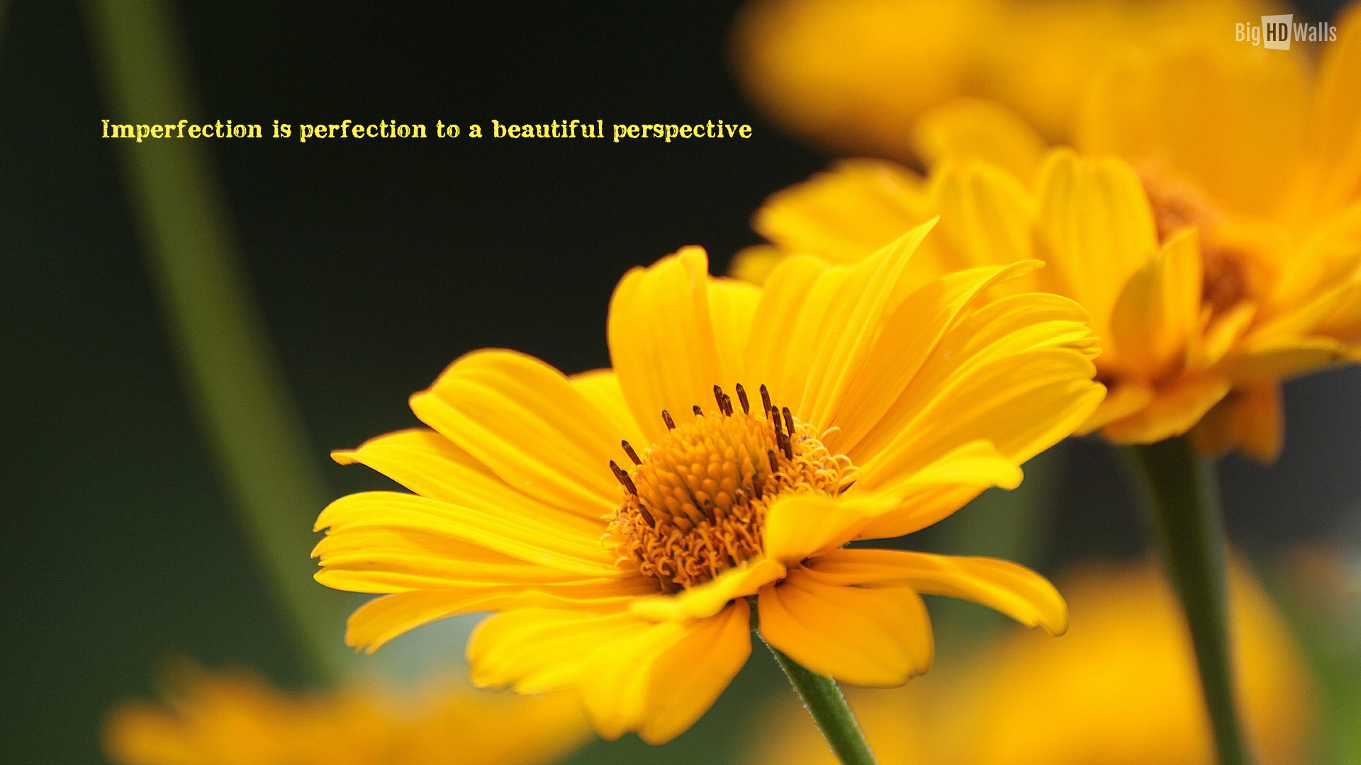 Beautiful yellow flower with an awesome quote Click on image to 1920x1080