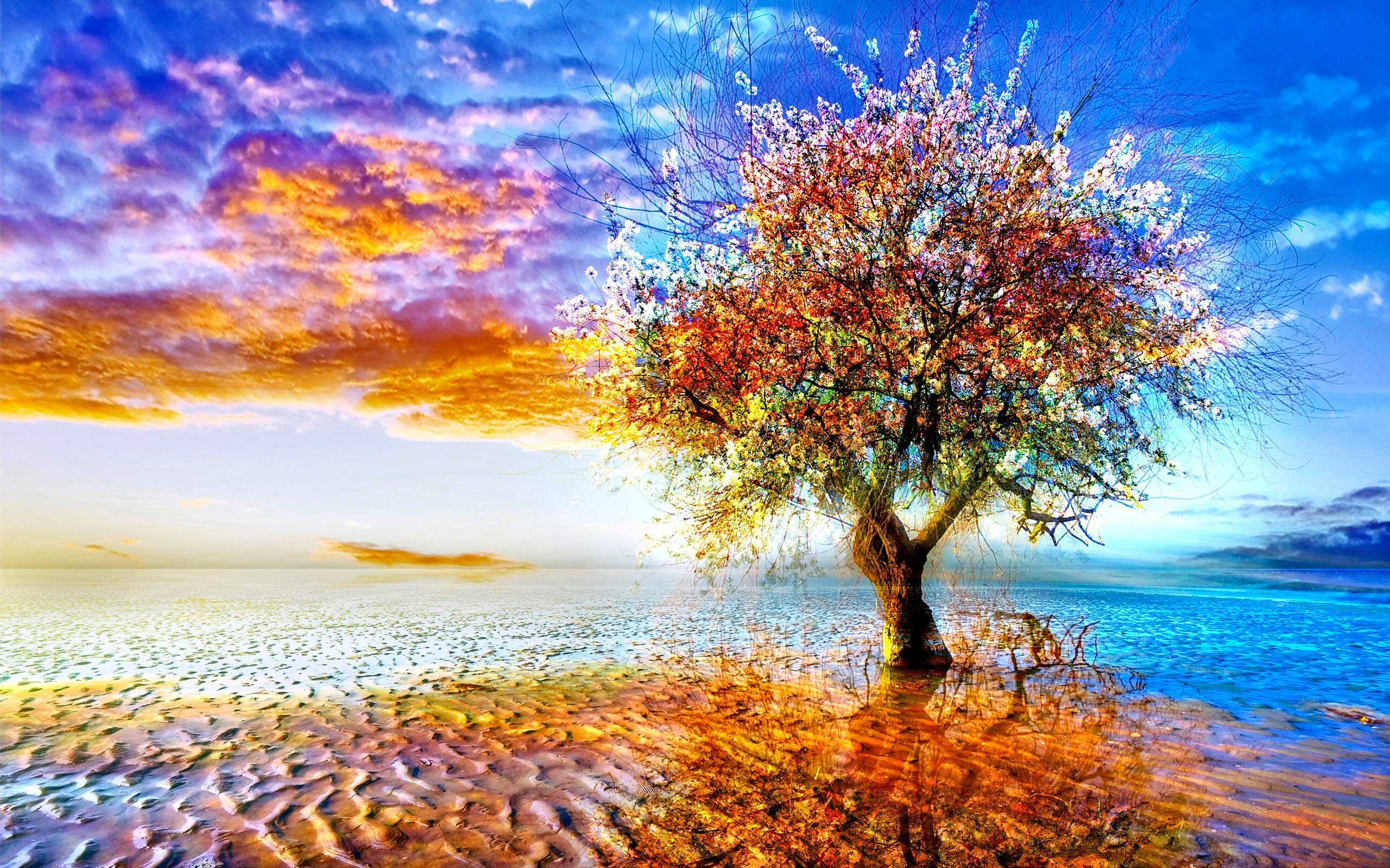 tree hd wallpapers - photo #30