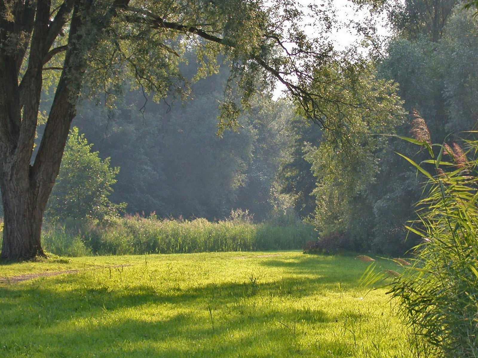 desktop wallpaper of Forest Clearing in Summer   beautiful nature 1600x1200