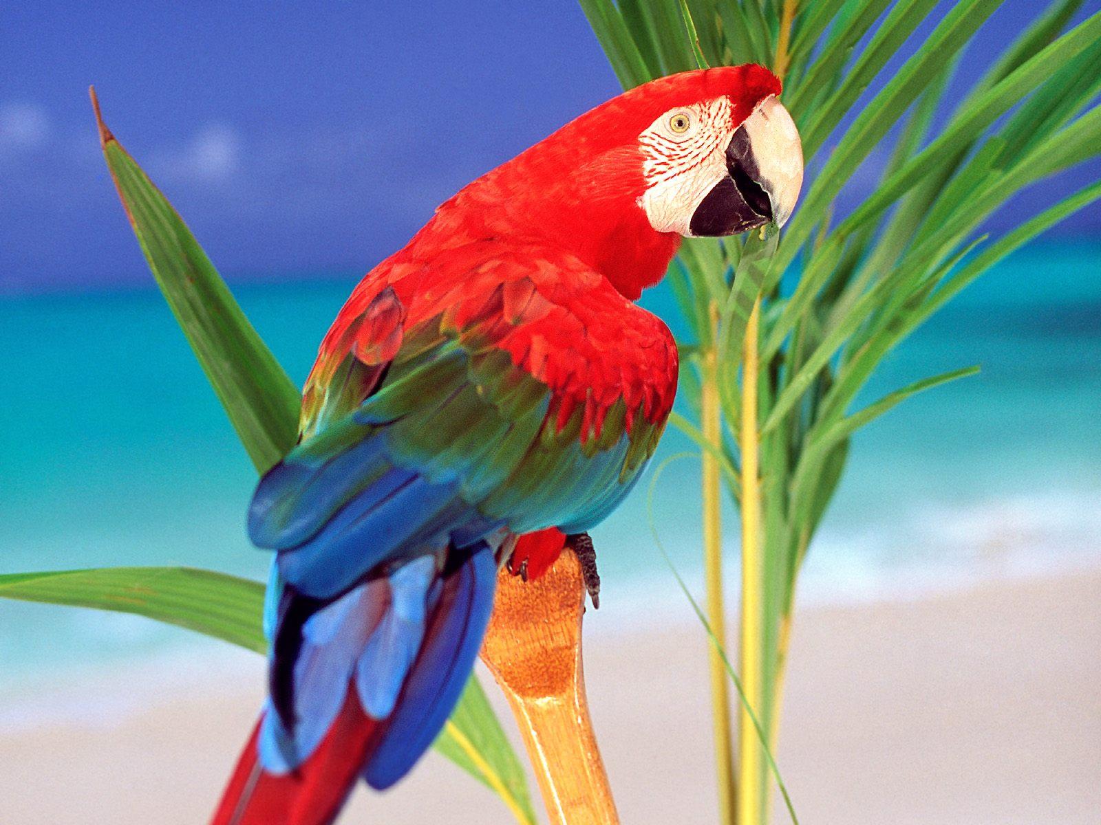Parrot Picture   Wide 1600 x 1200 Hd Desktop Wallpaper 1600x1200