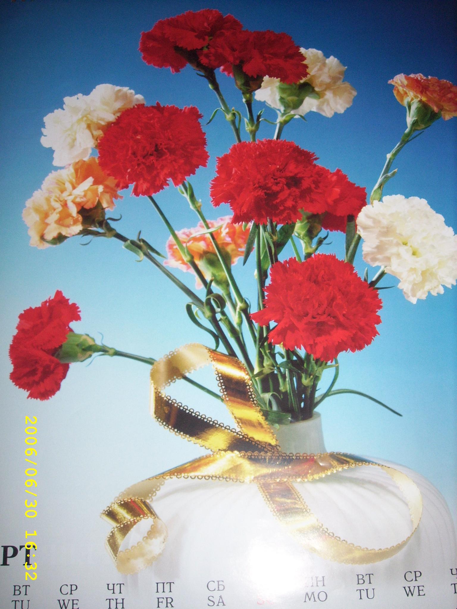 Card flowers 1536x2048 wallpaper 1536x2048