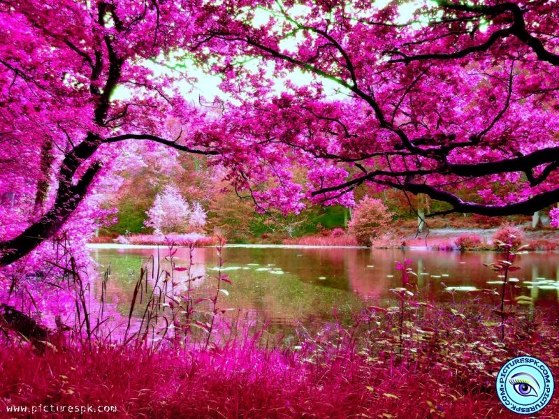View Pink Nature Picture Wallpaper in 800x600 Resolution 800x600