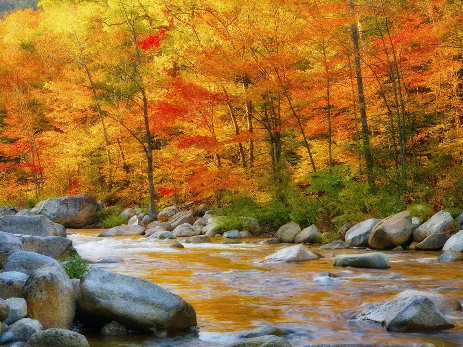 Nature world Wallpapers New Santa Banta 1600x1200