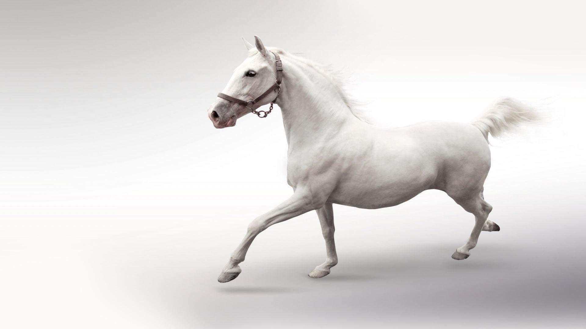 White Horse Wallpaper Wallpapersafari