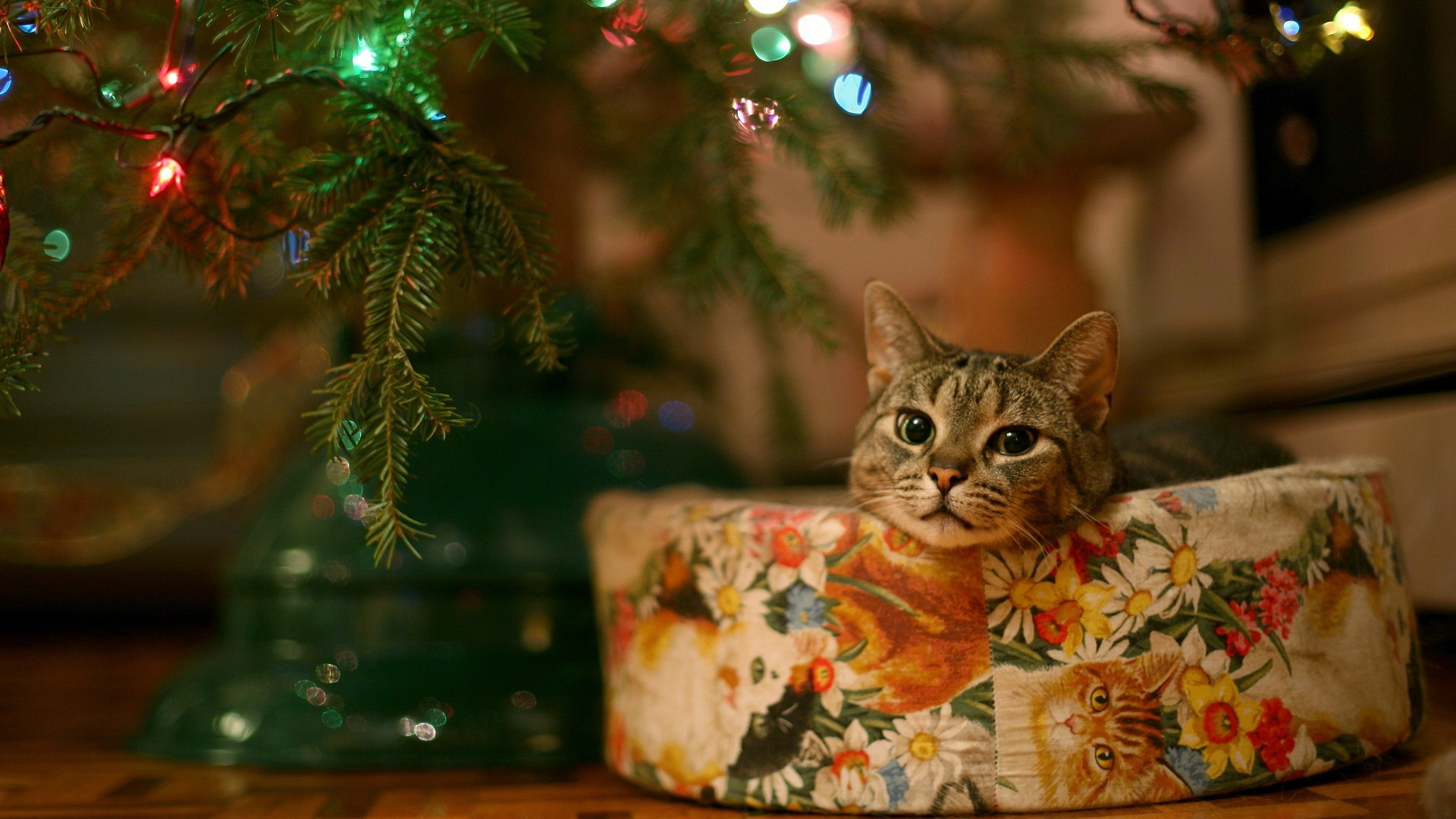 Cat under Christmas tree Widescreen Wallpaper   2403 1920x1080