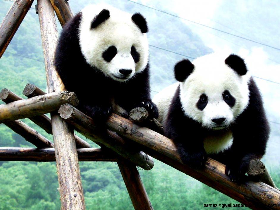 Searched Term panda bear wallpaper border 942x706
