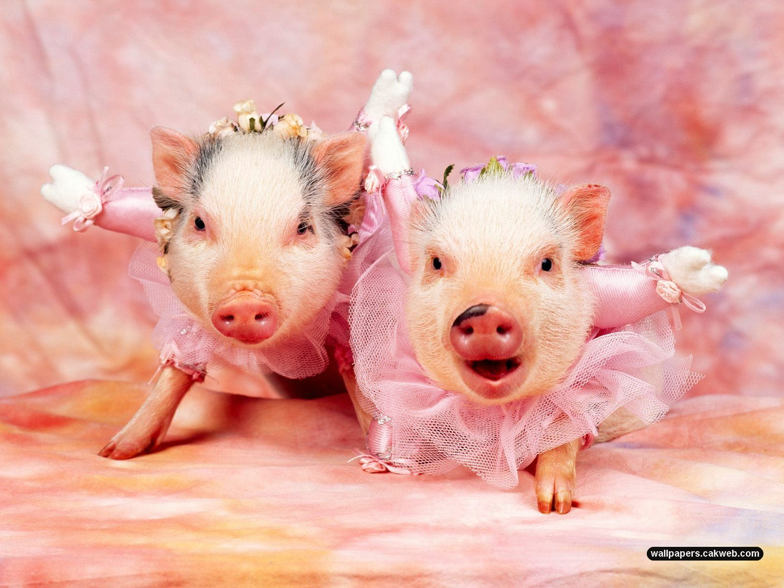 Cute Animal Wallpapers Top HD Wallpapers 1600x1200