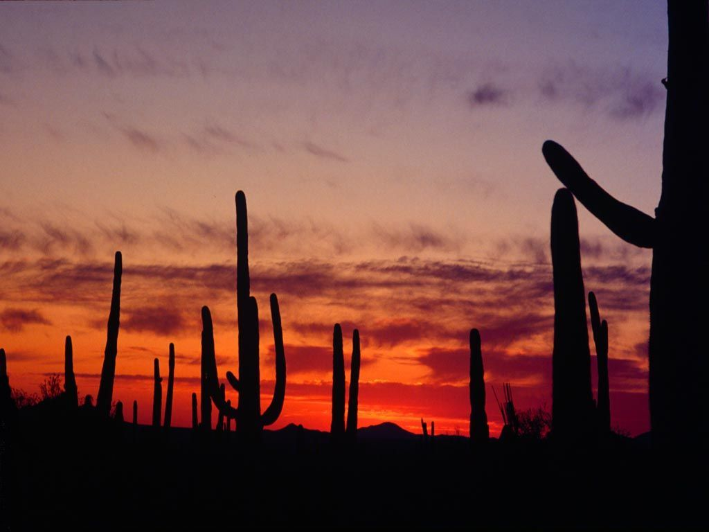 Picture of Arizona desert 1024x768