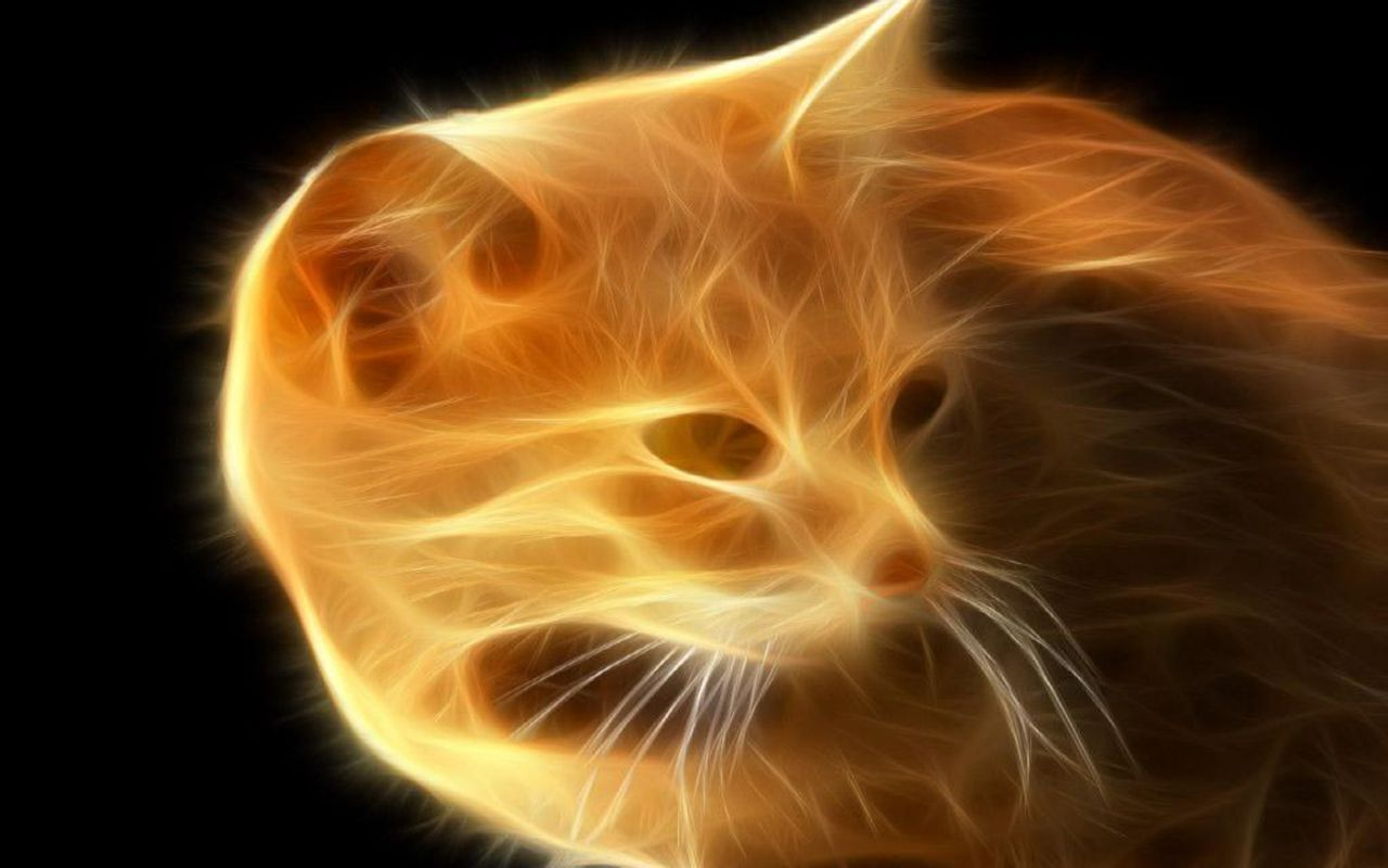 Fire Cat   Cats Wallpaper 16155630 1280x800