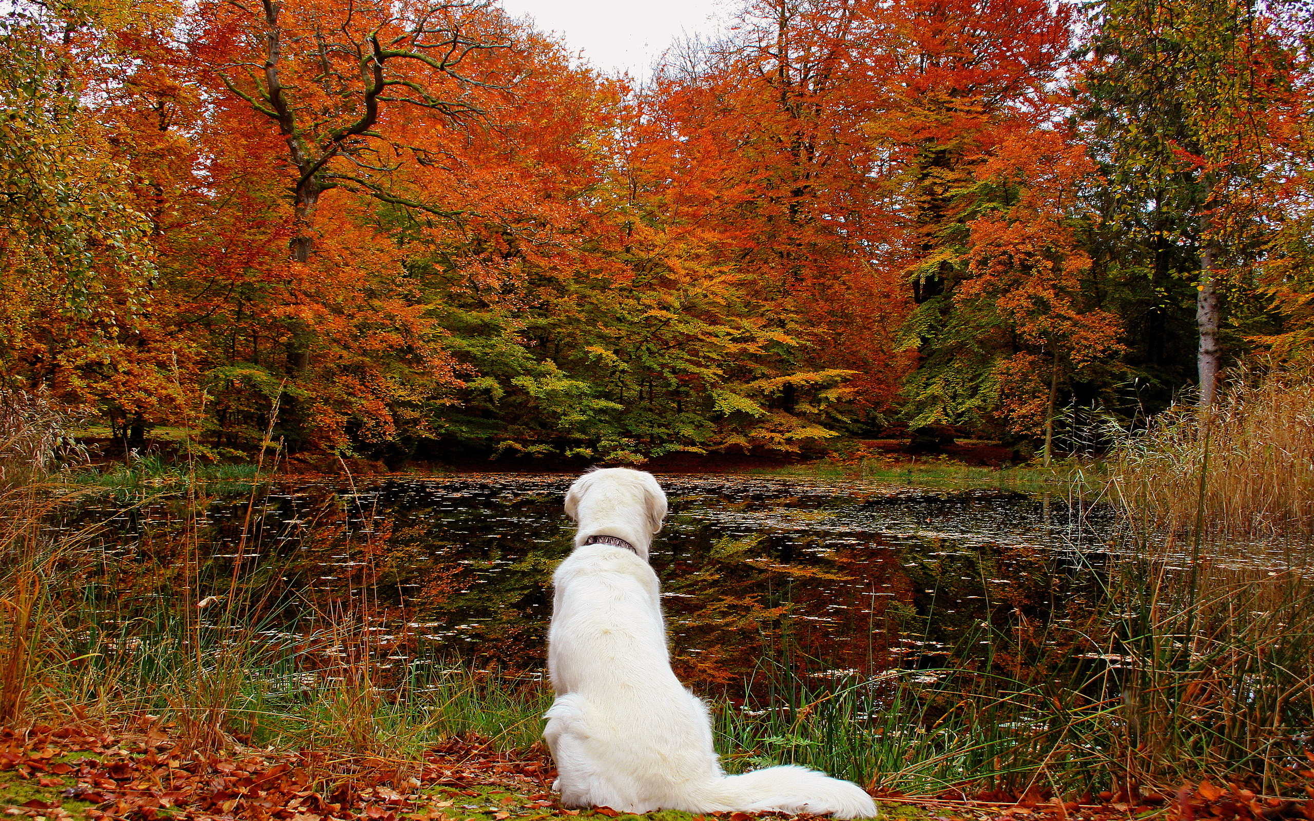 Lake leaves autumn dog forest f wallpaper 2560x1600 166519 2560x1600