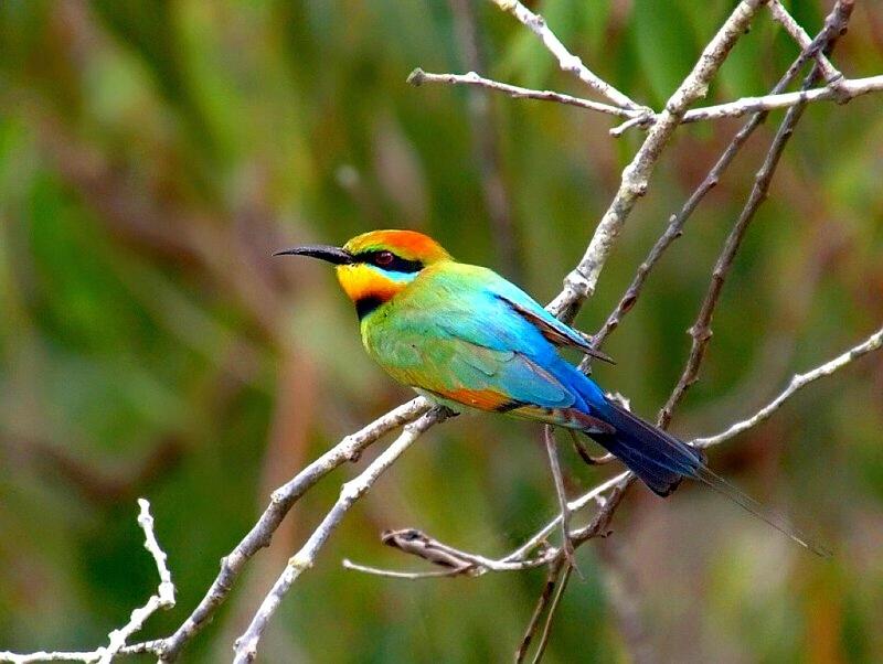 Beautiful Wallpapers For Desktop Beautiful Birds HD Wallpapers 800x602