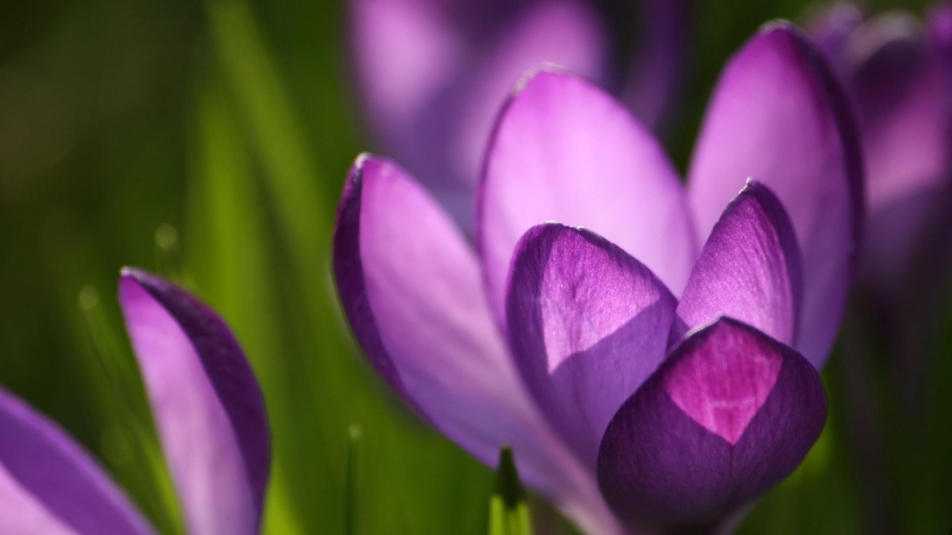 Spring flowers   Spring Wallpaper 22176446 1920x1080