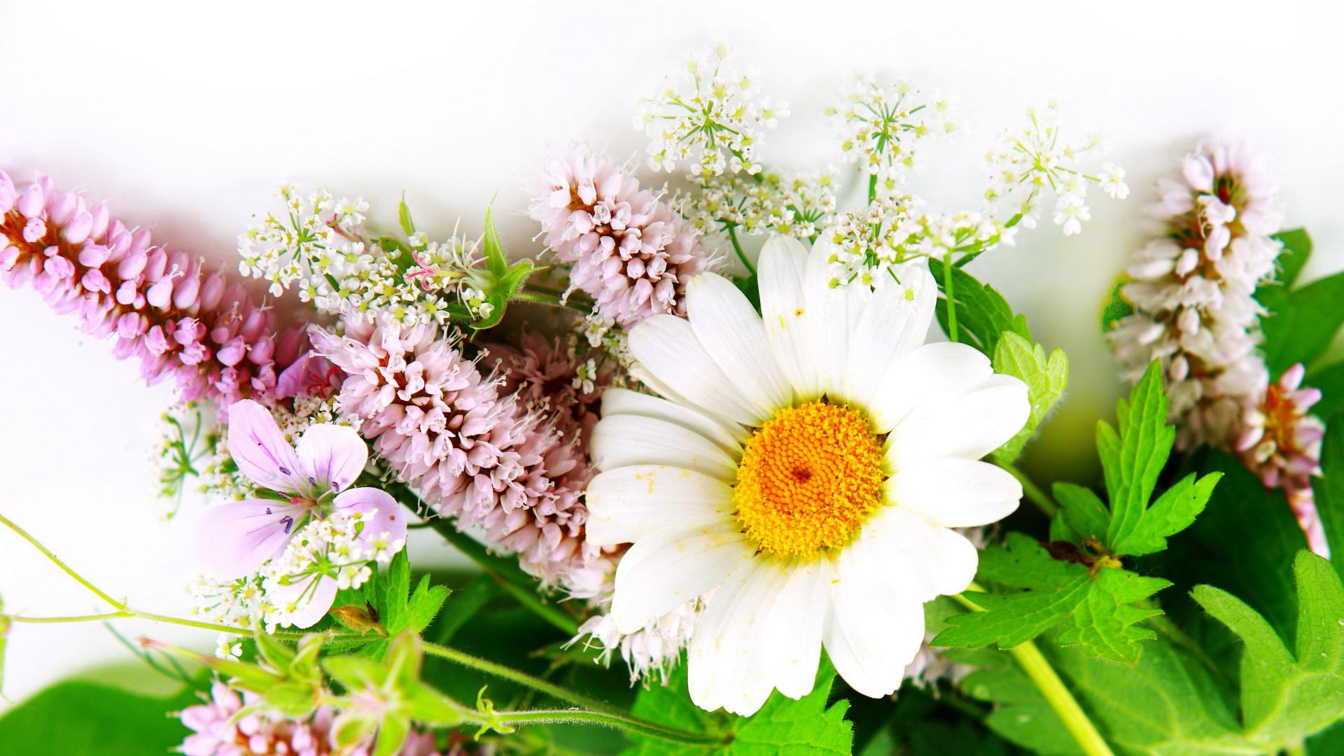Free Flower Wallpaper Downloads Wallpapersafari