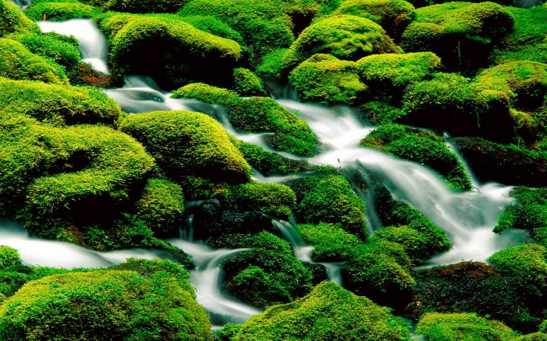 Incredible green waterfall 1440x900 nature wallpaper 1440x900