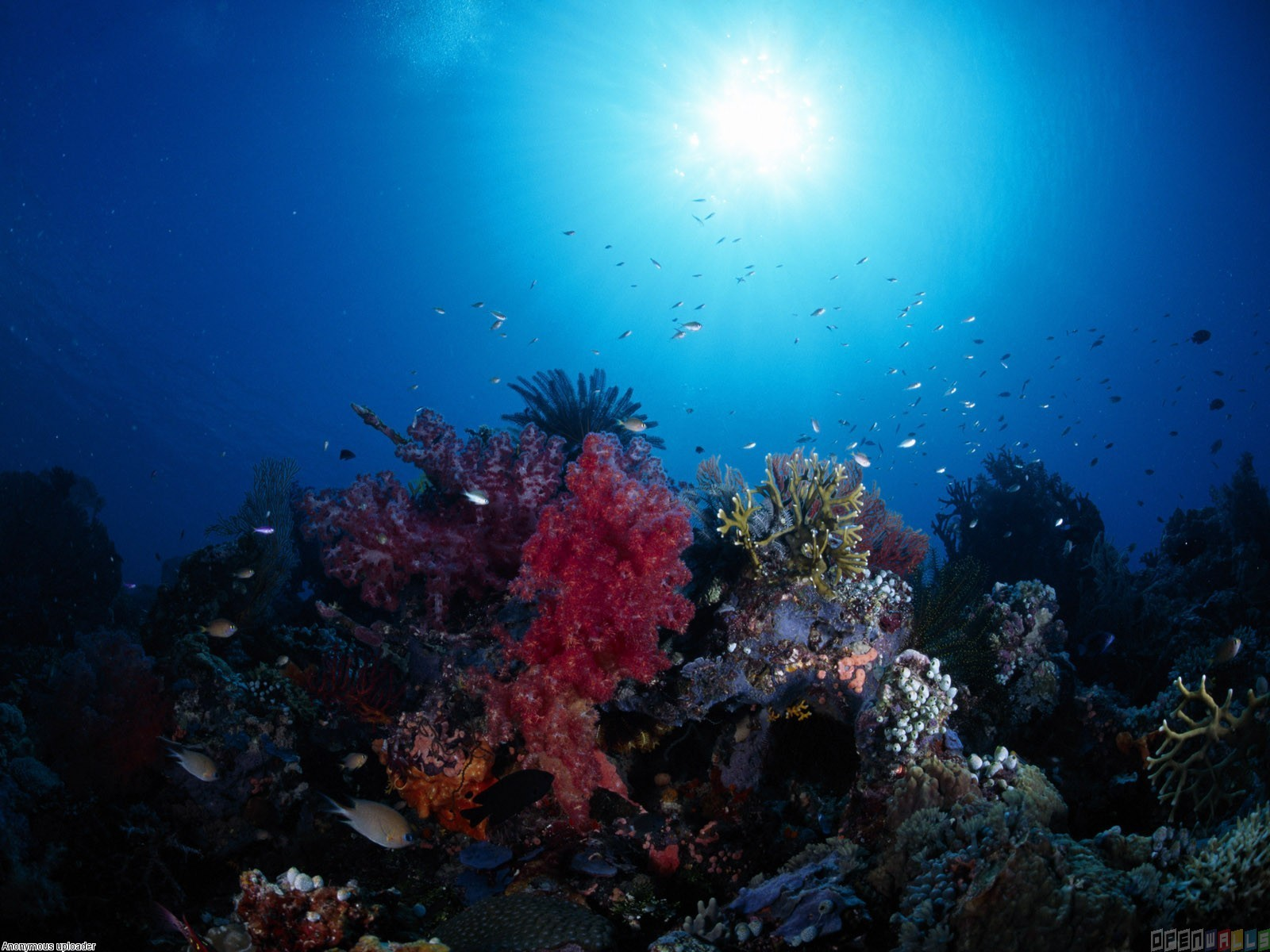 Coral reef wallpaper 3541   Open Walls 1600x1200