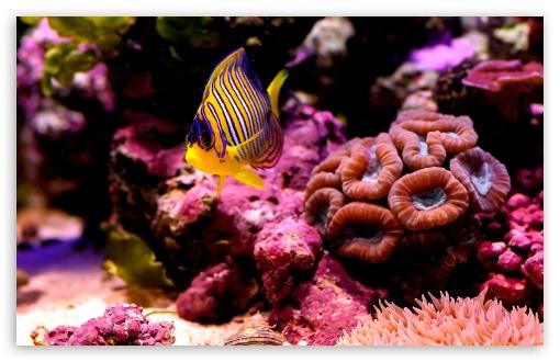 Reef Fish HD wallpaper for Standard 43 54 Fullscreen UXGA XGA SVGA 510x330