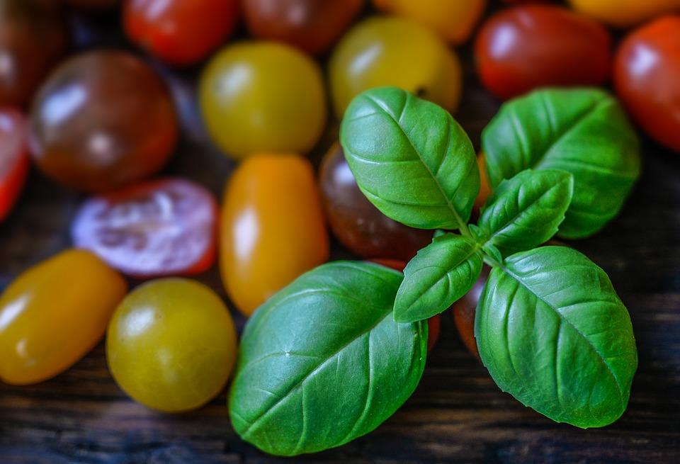 photo Tomato Fresh Food Wallpaper Background Basil   Max Pixel 960x655