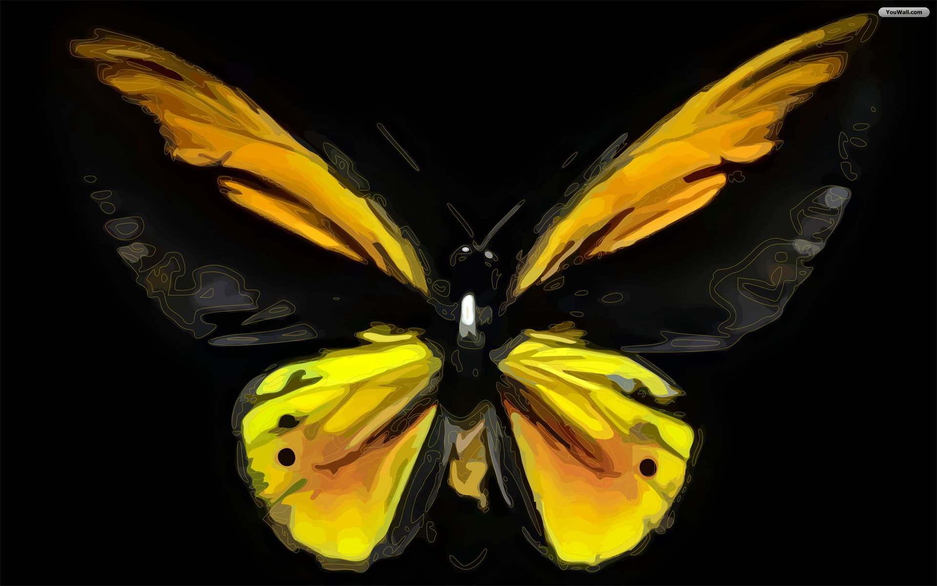 YouWall   Butterfly Wallpaper   wallpaperwallpapersfree wallpaper 1920x1200