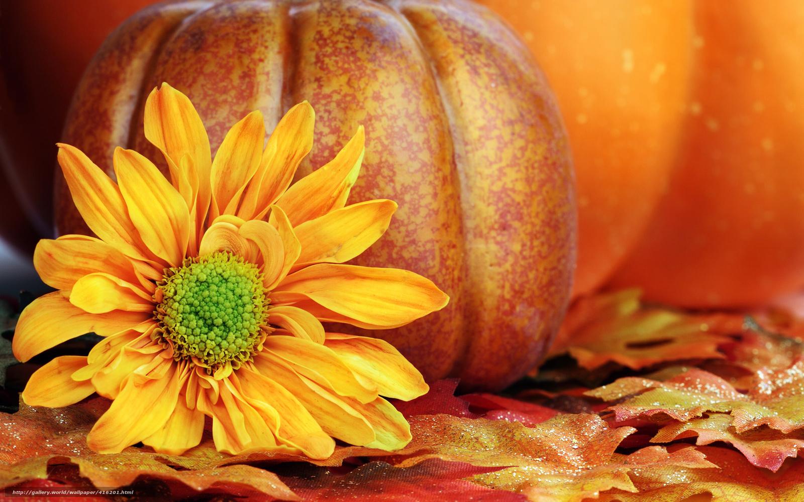 wallpaper flower yellow Petals pumpkin desktop wallpaper 1600x1000