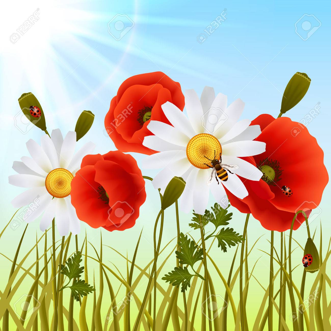 Red Romantic Poppy Flowers White Daisies And Grass With Ladybugs 1299x1300