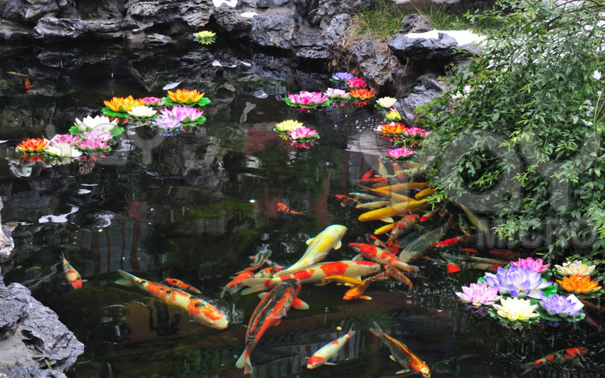 koi pond live wallpaper