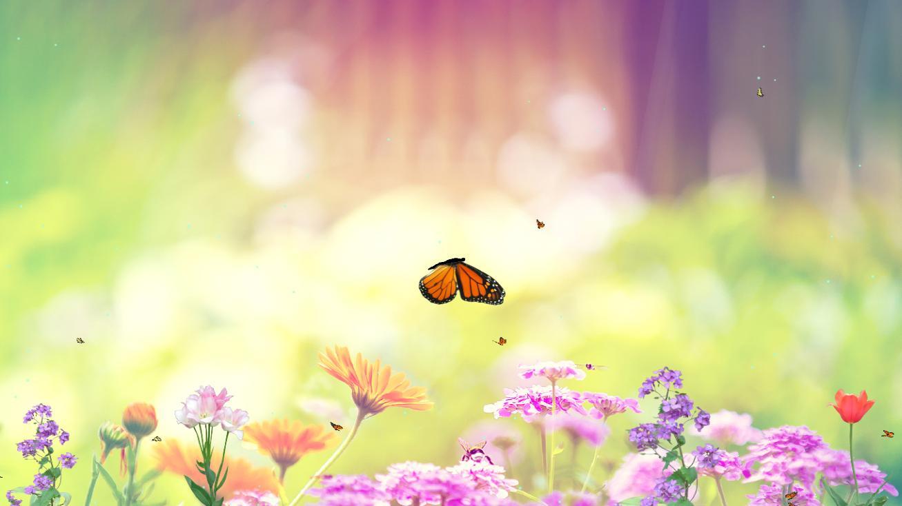 47+ Animated Butterfly Wallpaper on WallpaperSafari