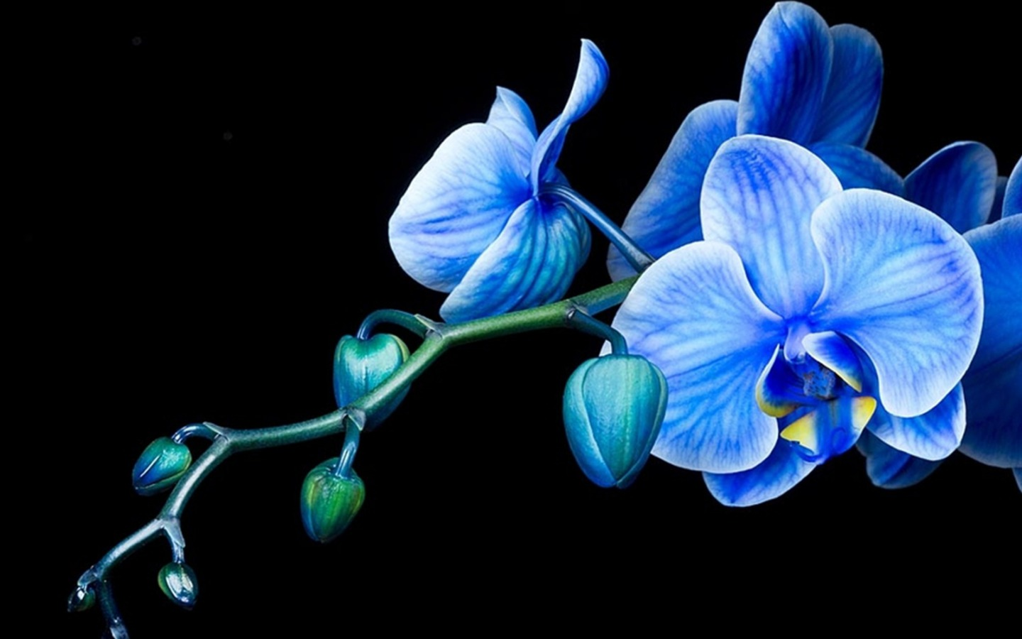 Habrumalas orchids in water wallpaper images - Free Orchid Wallpaper Wallpapersafari