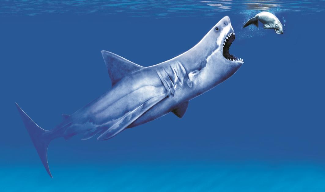 Megalodon Taking a Bite HD WallPaper Sharks Bite Hd Wllpper 1063x629