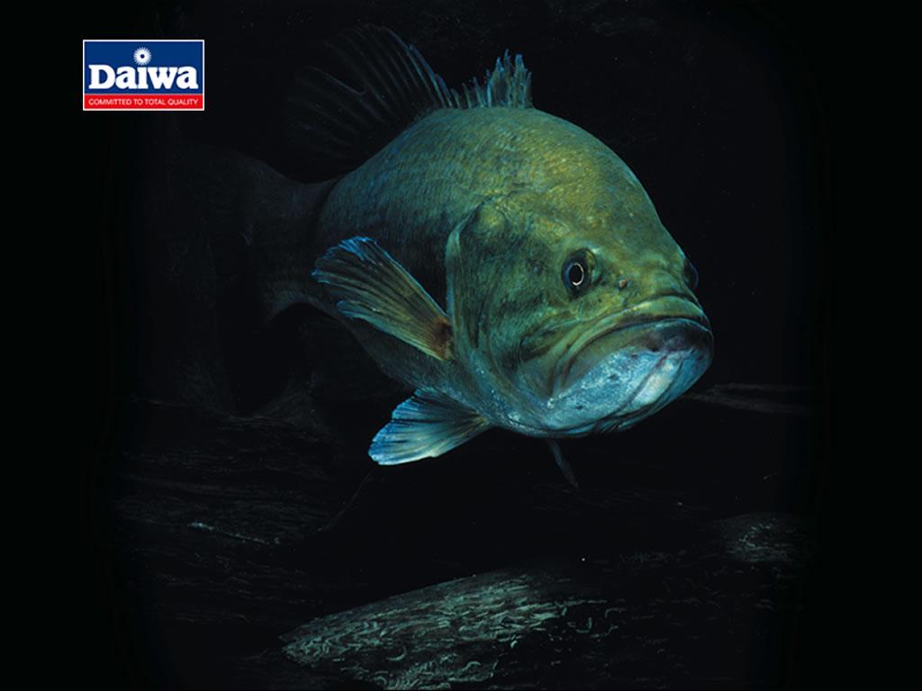 Pin Bass Fishing Wallpaper 1024x768